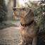 Zeth, het hondenmodel