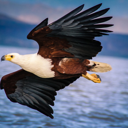 Eagle flyby