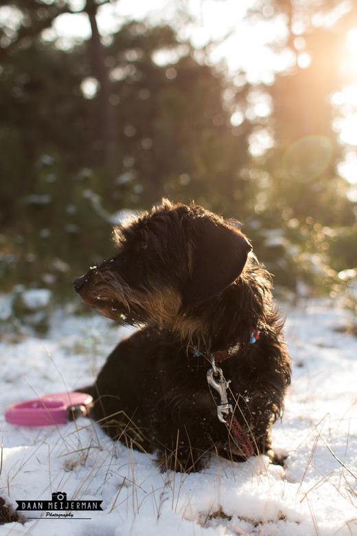 Finn in de sneeuw
