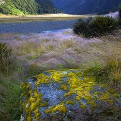 Nieuw - Zeeland 155