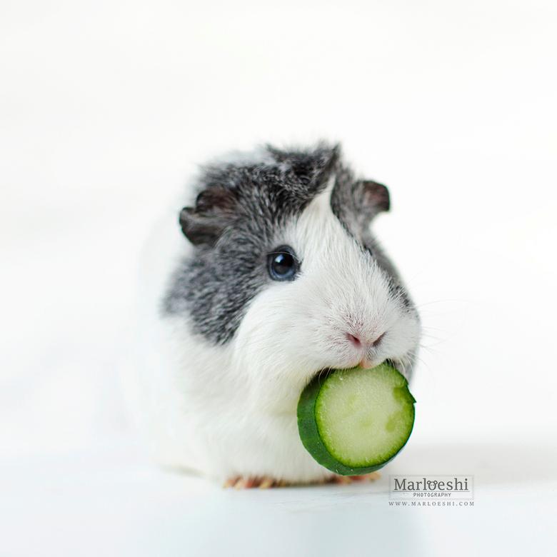 """Komkommer - Deel van mijn &#039;omnomnomnom&#039; serie met Mieps. Niks beter dan een stuk frisse komkommer op een warme dag. <img  src=""""/images/smile"""