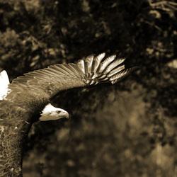 de kracht van de vogel in zijn geheel