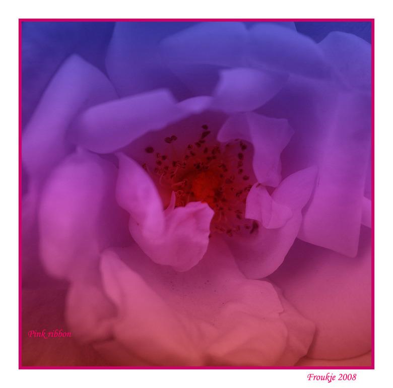 Pink Ribbon - Nog een bijdrage aan het roze lint <br /> Groetjes Froukje <br /> <br /> Bedankt voor de reacties op mijn vorige foto