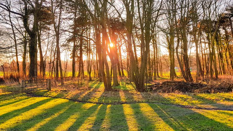Zonsopkomst bos bij Castricum