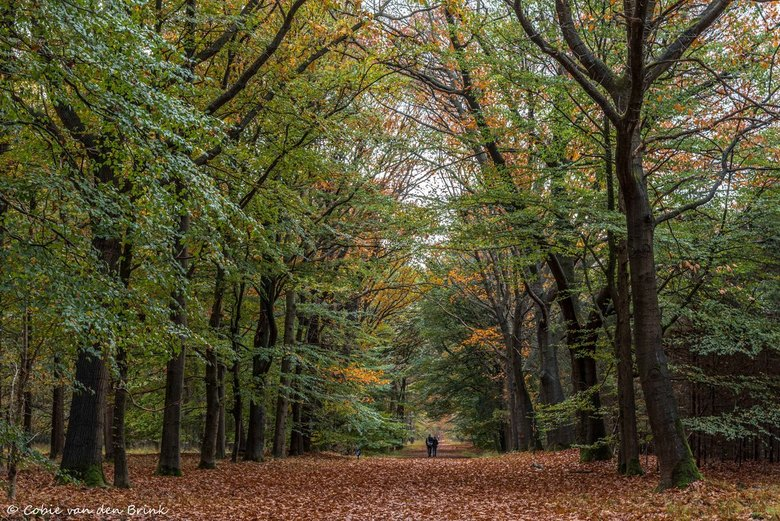 Natuurgebied de Nieuwe Heide 2 - Foto gemaakt tijdens mooie herfstwandeling in natuurgebied de Nieuwe Heide tussen Best en Son.<br /> De bospaden zij
