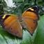 Prachtige vlinder .