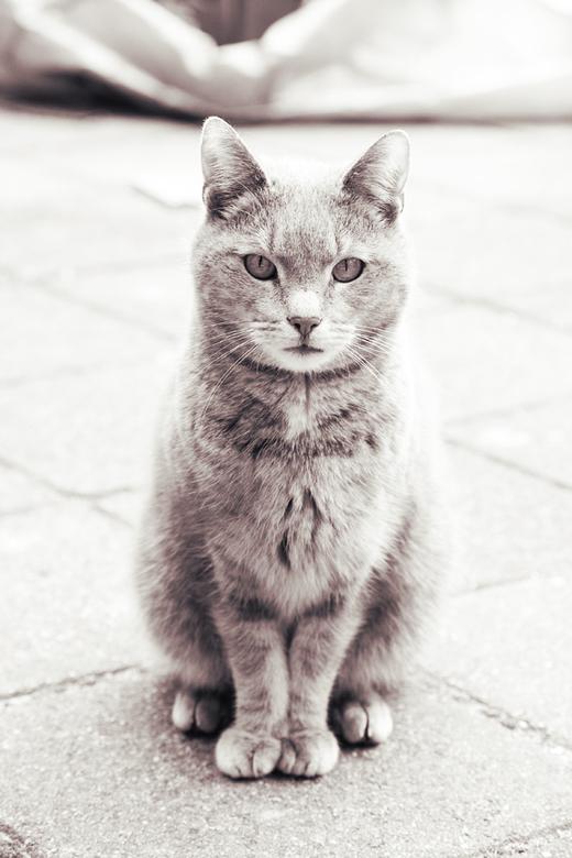 Nieuwe vriend - Wimpie (onze kat) heeft vriendschap gesloten met deze mooie kat en kon hem vandaag eindelijk op de foto zetten, omdat hij in het begin
