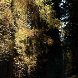Het bos...