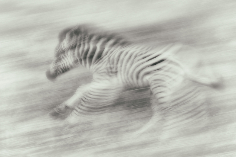 Chasing Stripes