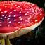 Op een grote paddenstoel....