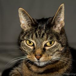 Mijn katje Riffeke ♀