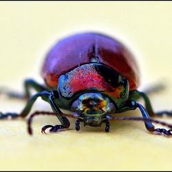 een van de Beetles