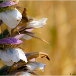 Kreta Flora 2.jpg