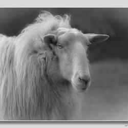 de fijnste wol.......
