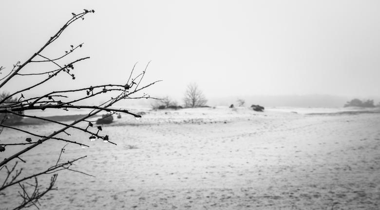 Kootwijkerzand in de mist - Kootwijkerzand in de ochtendmist met druppels aan de takken.