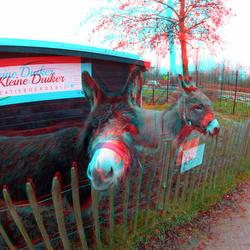 Ezels Barendrecht 3D GoPro