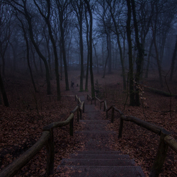 stairs to a magical forest