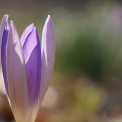 Bijna voorjaar