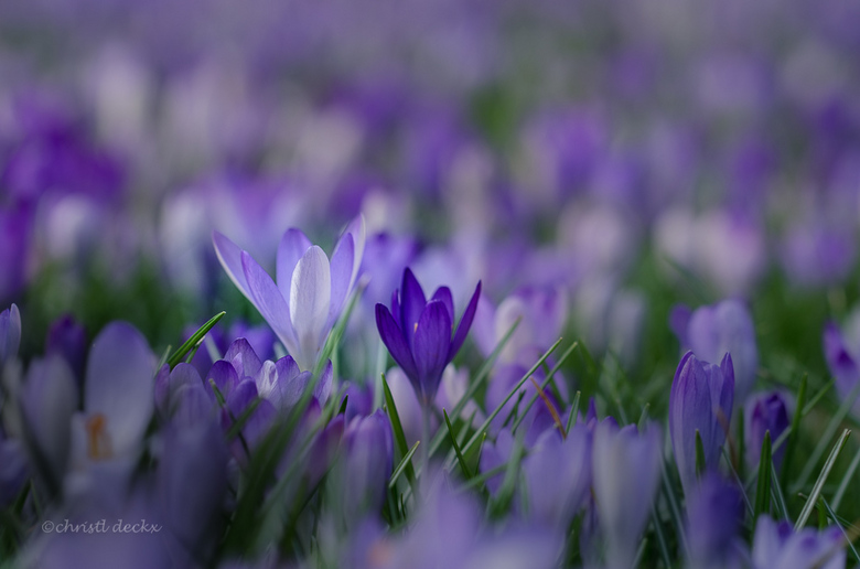 spring(out)field -