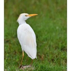 Egret Shower
