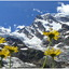 Bloemenzee aan zuidkant Monte Rosa (2)