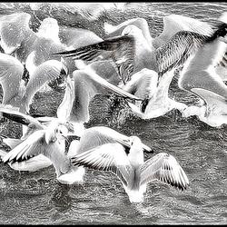 dancing birds..