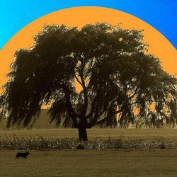 Ondergaande zon 4