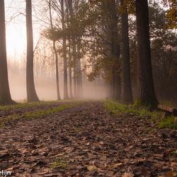 benkske in de mist