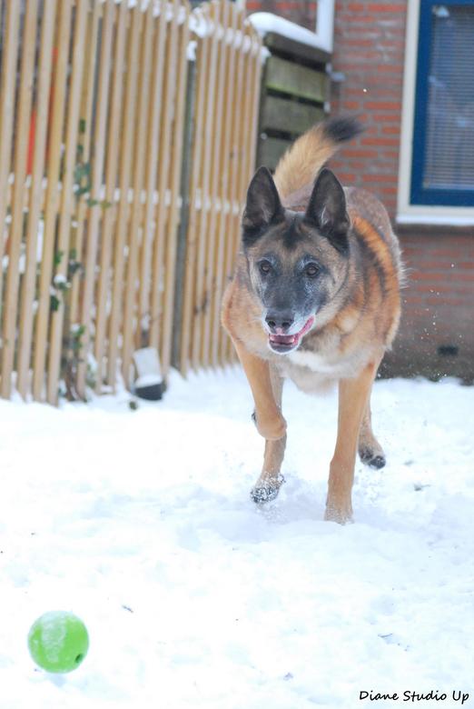 Snowrun - Rhodi heeft genoten van de sneeuw; lekker gek doen in die witte wereld! Daar word je als senior nog net zo blij van als toen je een jonge ho