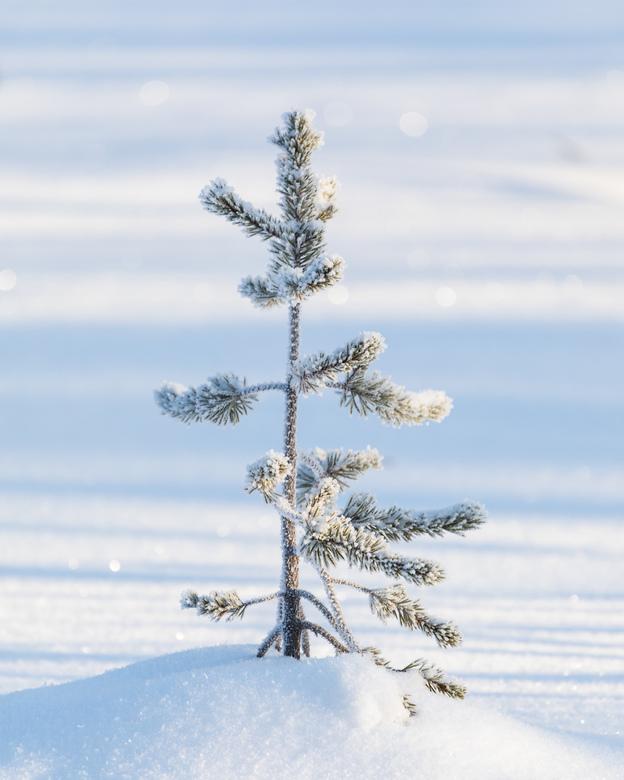 Mini tree! -