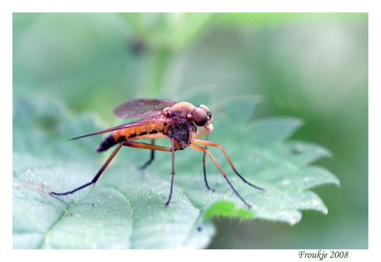 bruinoogje - Deze foto zat nog in het vat .<br /> Bedankt voor de geweldige reacties op mijn slakkenfoto .<br /> Groetjes Froukje