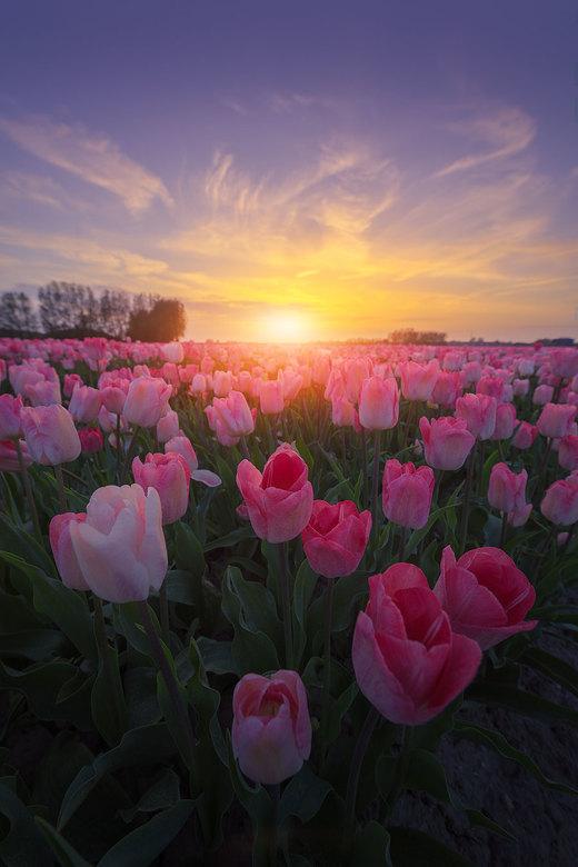 Flowerbomb -