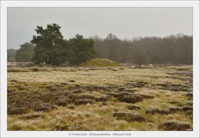 Schaopedobbe - Elsoo - Friesland - Wandelexcursie door een heide/veen gebied na een nacht met vorst