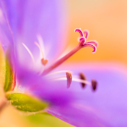 blauw bloemetje