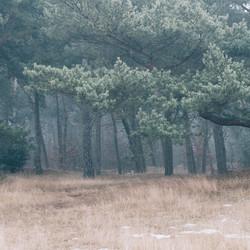 Bos Weerterbergen
