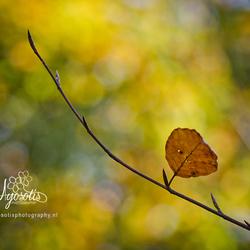 Eenzaam herfst blad
