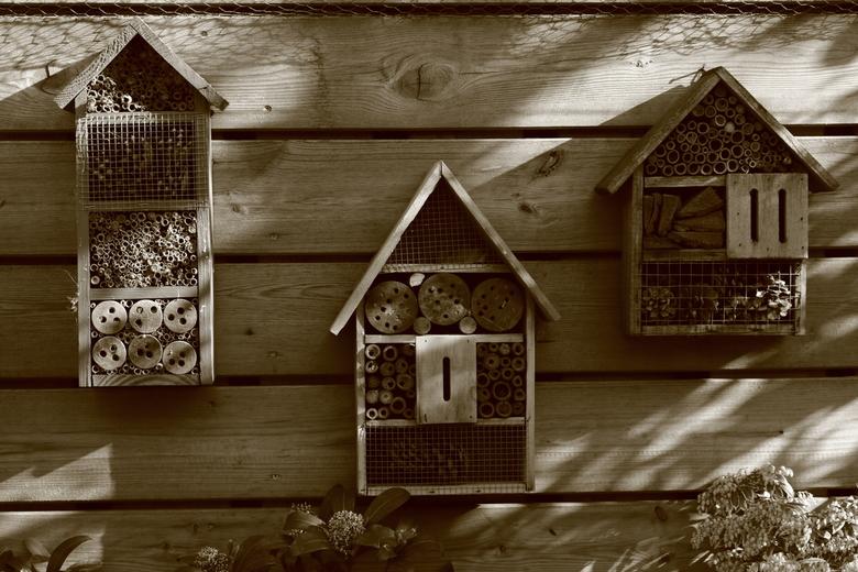 Oude huisjes, nieuwe bewoners -