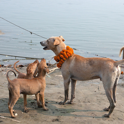 Hondenleven 9