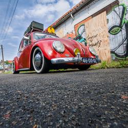 A lady Bug!