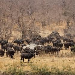 african savanne