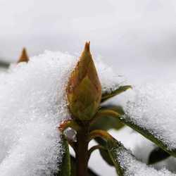 Alles bedekt met eenlaagje sneeuw