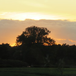 Avond zonnetje bij de maas in Arcen