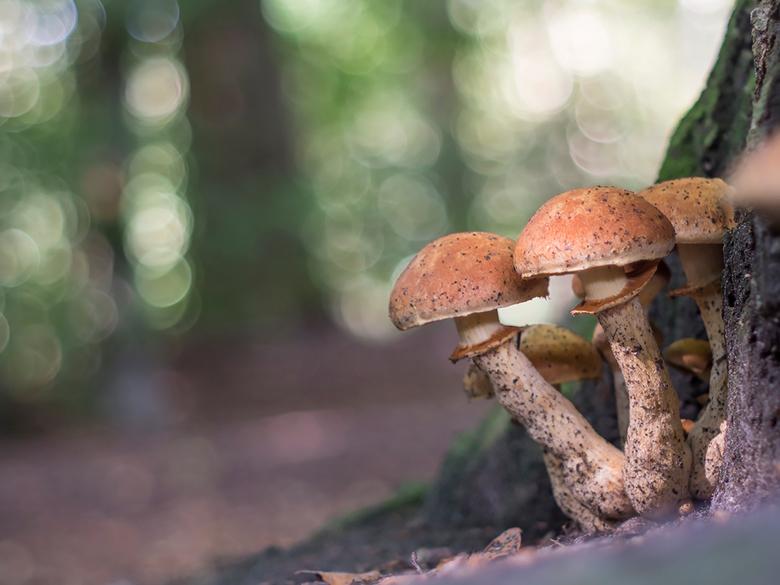 spelen in het bos 2