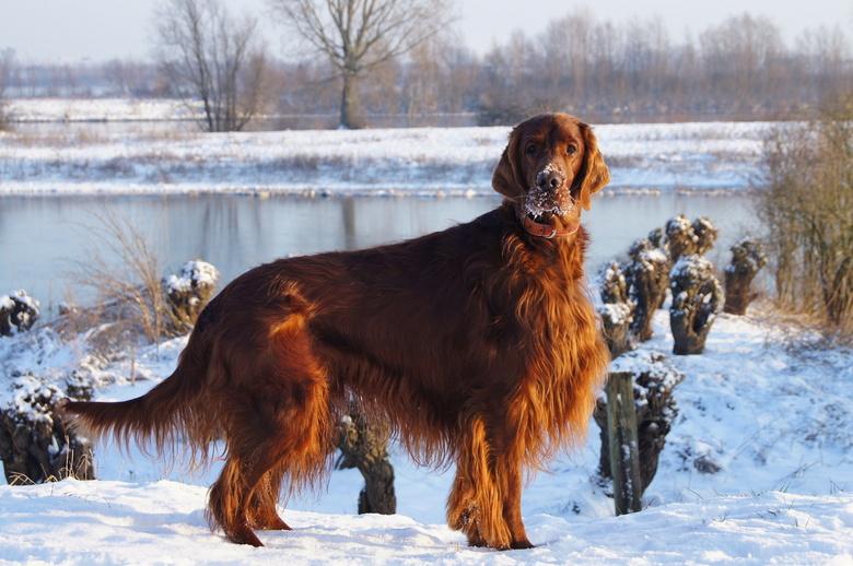 Red beauty! - Samen genieten van de sneeuw