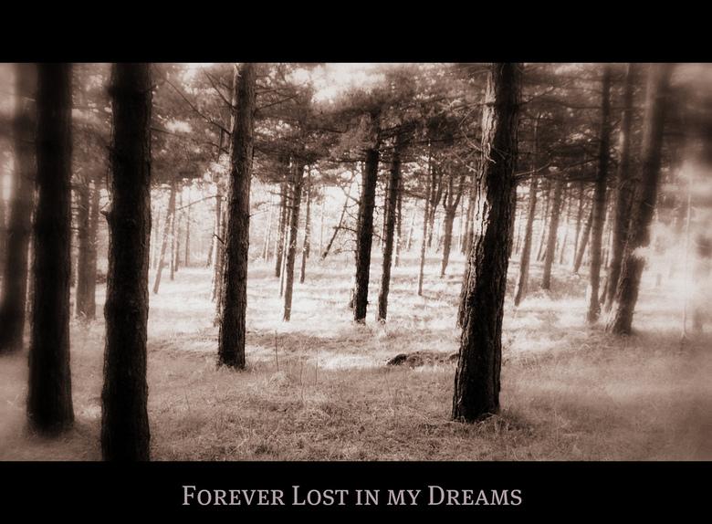 Forever Lost in my Dreams - Bomen in de duinen bij Noordwijkerhout verwerkt in Flickr.
