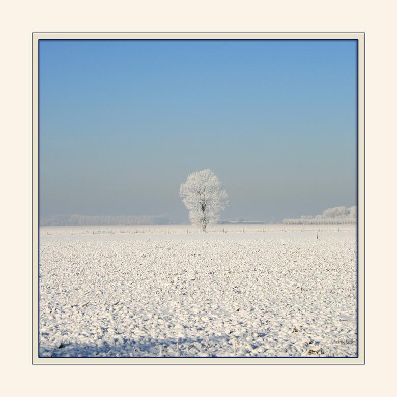 Alone in the landscape - Toch nog meer winters Wit. Nu staat deze boom eenzaam en alleen midden in het land. De rest van de omgevingen weg gelaten.<br
