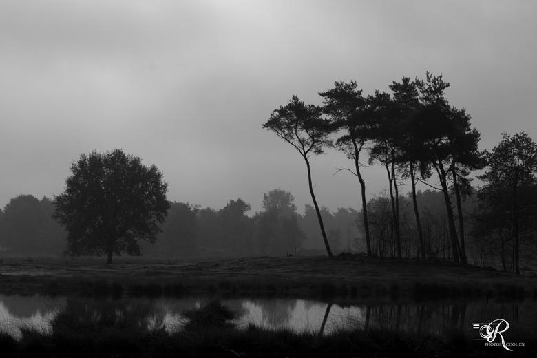 Hatertse Vennen01 - Vorige week in de ochtend, met mist, foto´s gemaakt bij dit prachtige natuurgebied