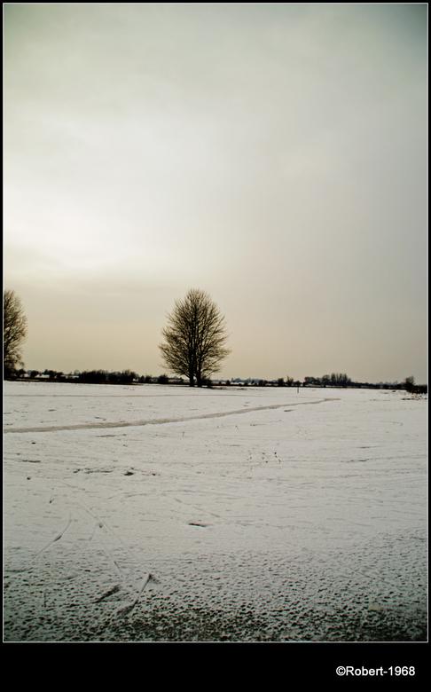 winter tree - Boom in een winters landschap,