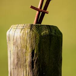 Roestige spijkers in houten paal