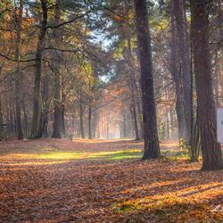 Het magisch bos
